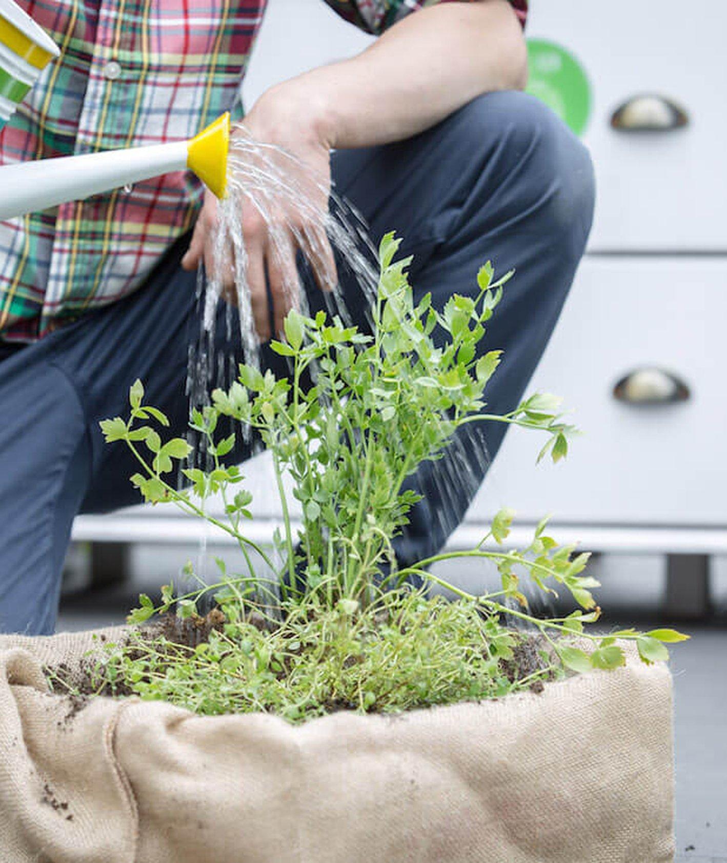 jak zrobić gródek, ogród w domu, domowy ogródek kukbuk