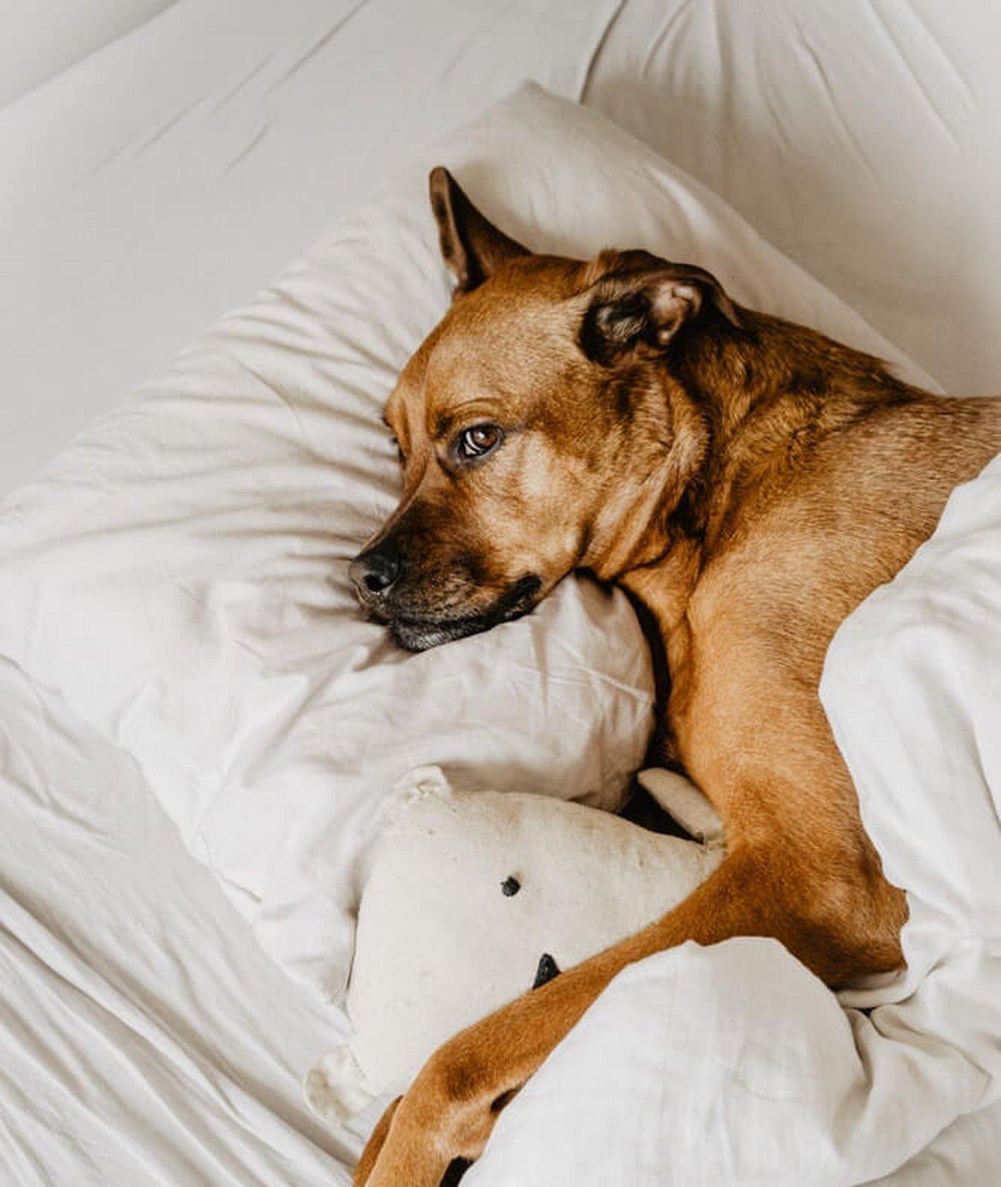 Czy posiadanie psa pomaga na zdrowie? Posiadacze psów są mniej zestresowani