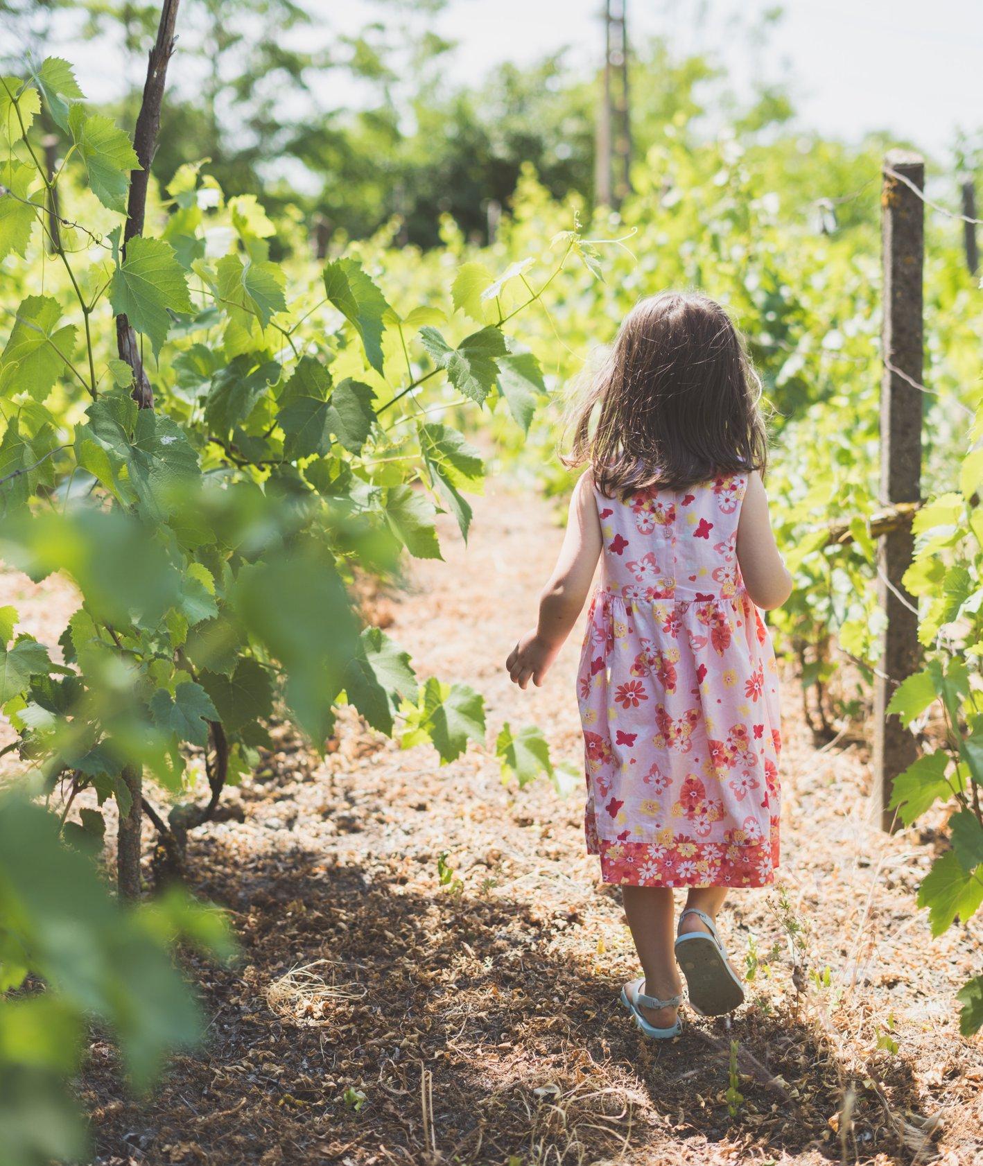 dziewczynka spaceruje wśród winorośli