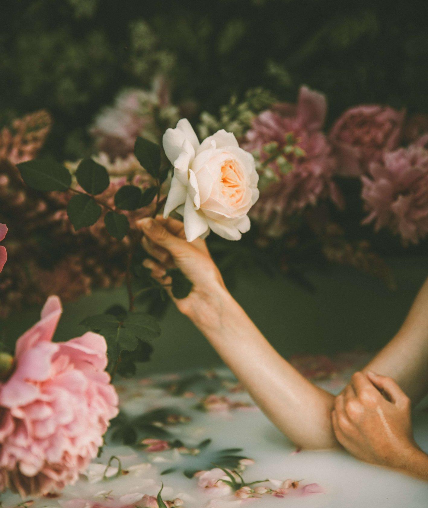 Kobieca ręka trzyma różę (fot. Anita Austvika/unsplash)