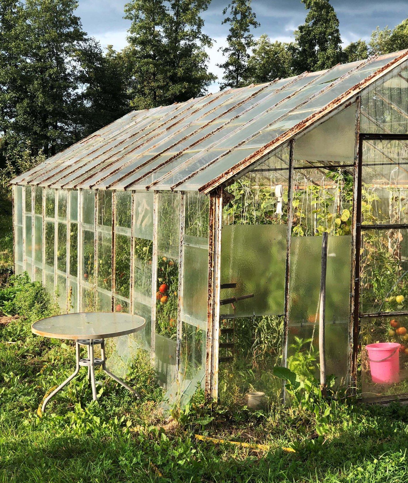 Szklarnia z pomidorami, dlaczego wraca trend działkowiczów (fot. Zuza Rożek)