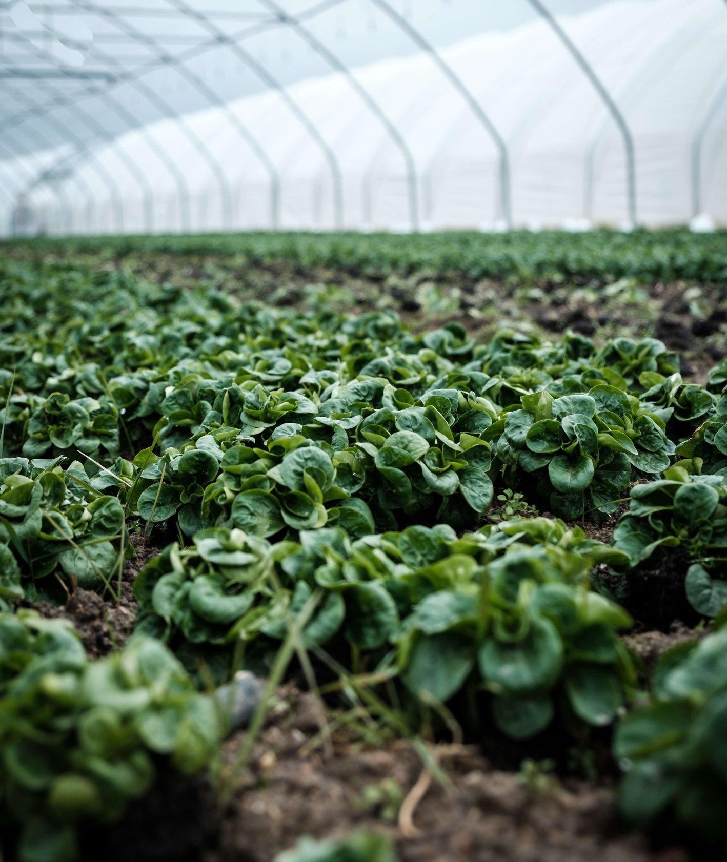 Ekologiczne uprawy (fot. Daniel Fazio / unsplash.com)