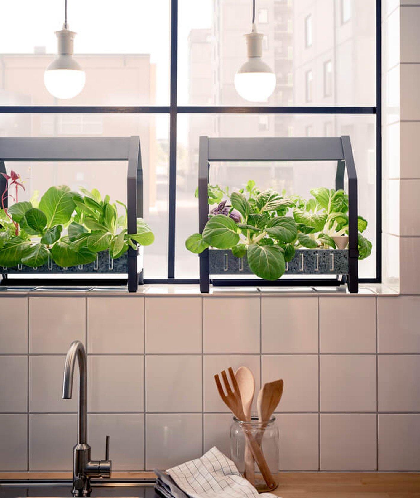 domowa uprawa warzyw i ziół - mini szklarnie z ikei (fot. materiały prasowe)